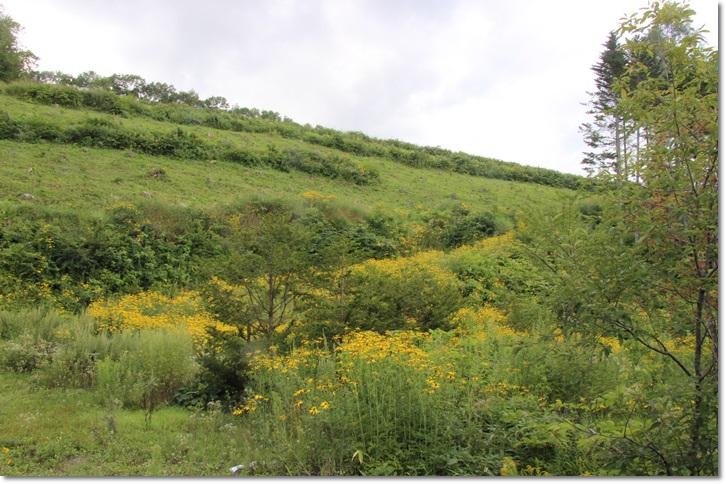 美瑛の丘と雲(8・13)_f0146493_1561089.jpg