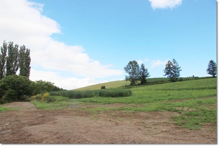 美瑛の丘と雲(8・13)_f0146493_1565055.jpg