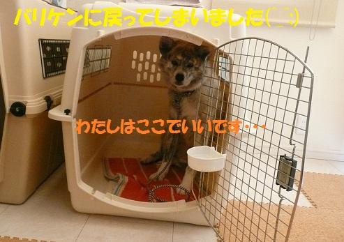 f0121712_16324096.jpg