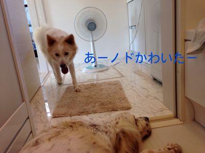 e0197434_168857.jpg