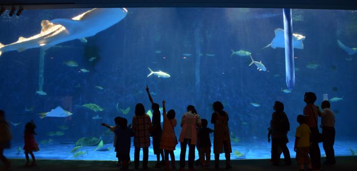 かごしま水族館写真_e0171573_2514097.jpg