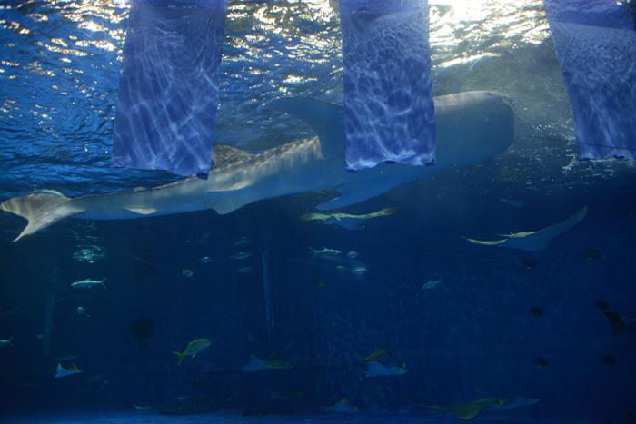 かごしま水族館写真_e0171573_2514862.jpg