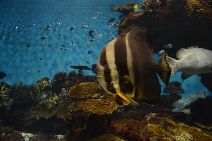 かごしま水族館写真_e0171573_2521365.jpg
