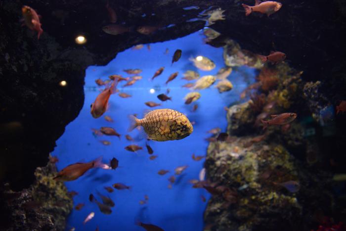 かごしま水族館写真_e0171573_2522455.jpg