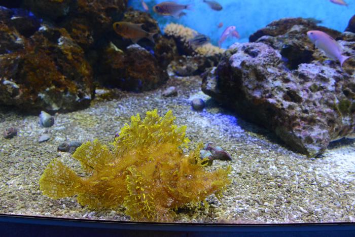 かごしま水族館写真_e0171573_252286.jpg