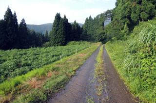 京ヶ原水路周辺の道路は大雨の影響もあって水浸し....._b0194185_22573567.jpg