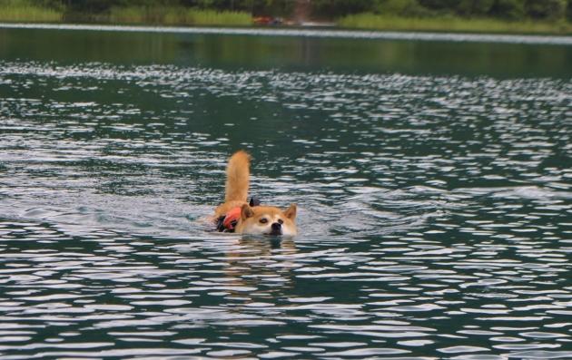 戸隠キャンプ2014⑥ かぼちゃん泳ぎます!_a0126590_09313184.jpg