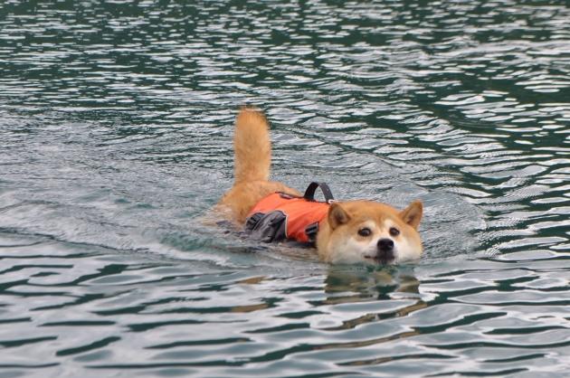 戸隠キャンプ2014⑥ かぼちゃん泳ぎます!_a0126590_09315030.jpg
