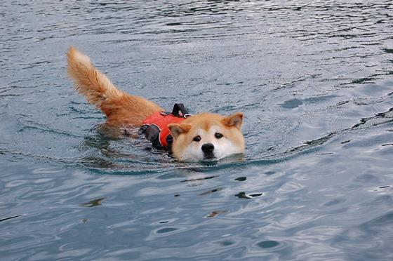 戸隠キャンプ2014⑥ かぼちゃん泳ぎます!_a0126590_10465105.jpg