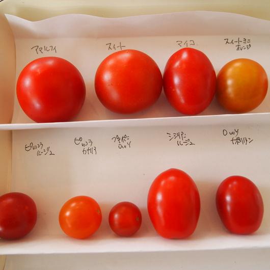トマト色々_a0292194_19443595.jpg