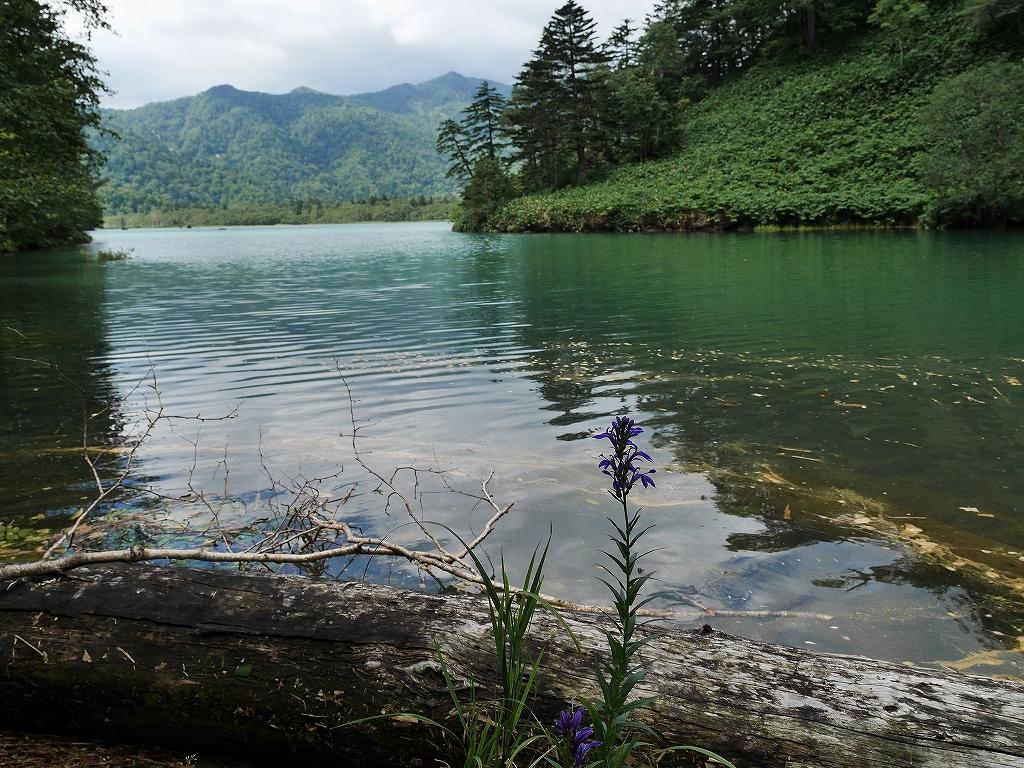 北海道3大秘湖のオコタンペ湖 : デジカメ持って野に山に