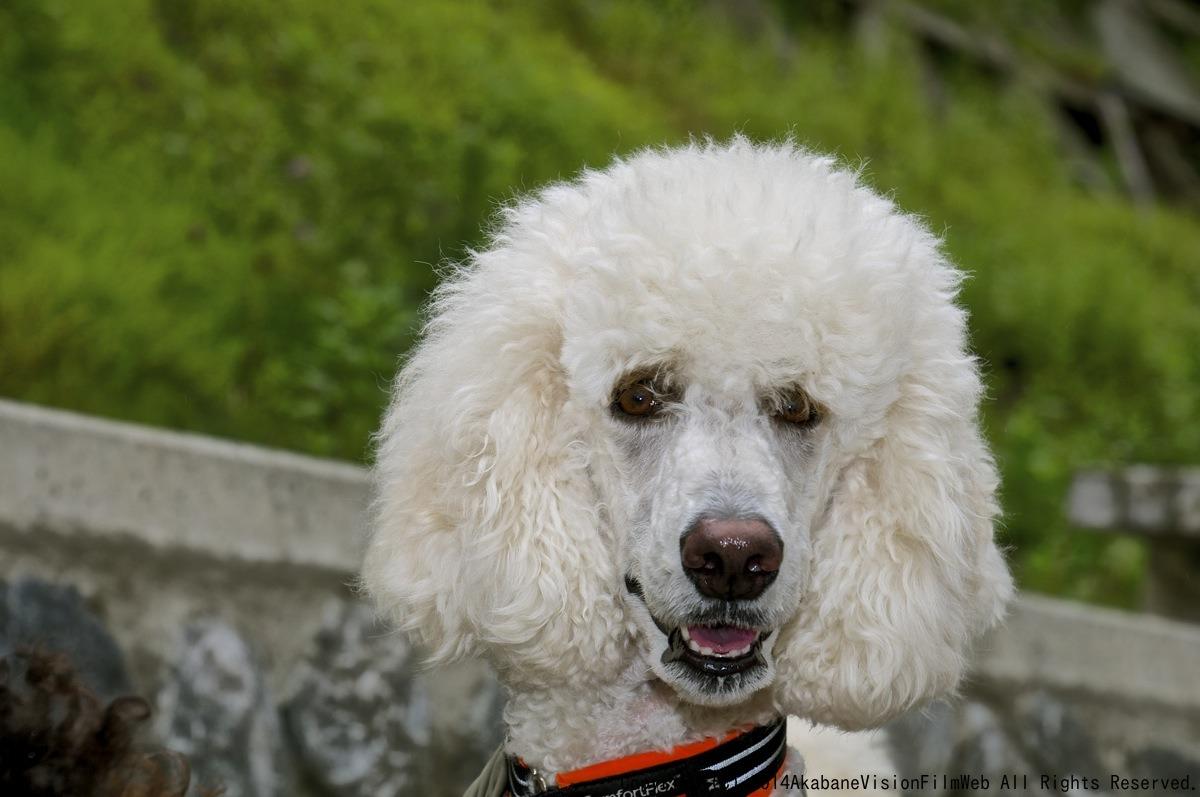 8月16〜17日滝沢サイクルパークの風景VOL1_b0065730_13182384.jpg