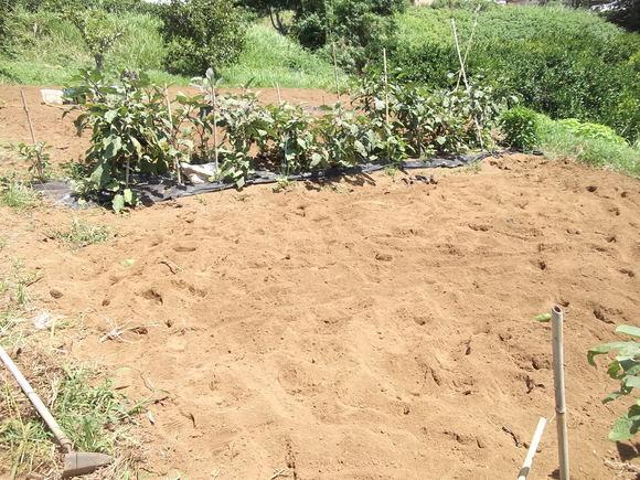 夏から秋に畑は衣替えです。_b0137932_172031100.jpg
