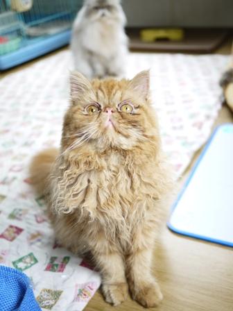 猫のお友だち ターボくん待夢ちゃん華音ちゃんべ~べちゃん雪月花ちゃん陽菜ちゃん編。_a0143140_23293921.jpg