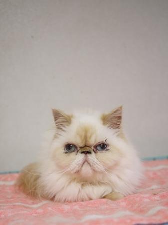 猫のお友だち ターボくん待夢ちゃん華音ちゃんべ~べちゃん雪月花ちゃん陽菜ちゃん編。_a0143140_2333822.jpg