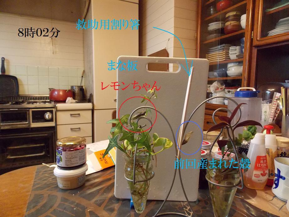 b0193252_20285846.jpg