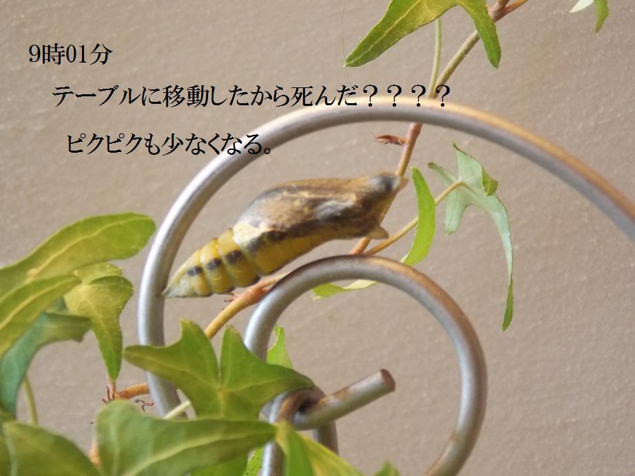 b0193252_20293382.jpg