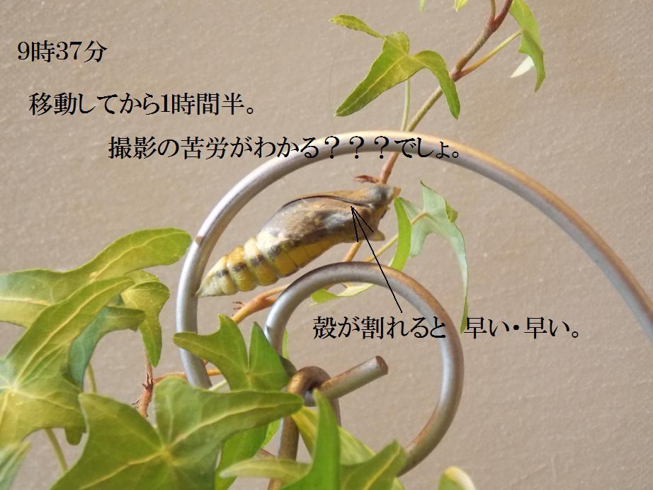 b0193252_20295039.jpg