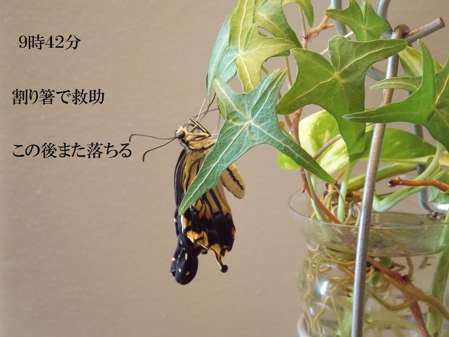 b0193252_20331197.jpg