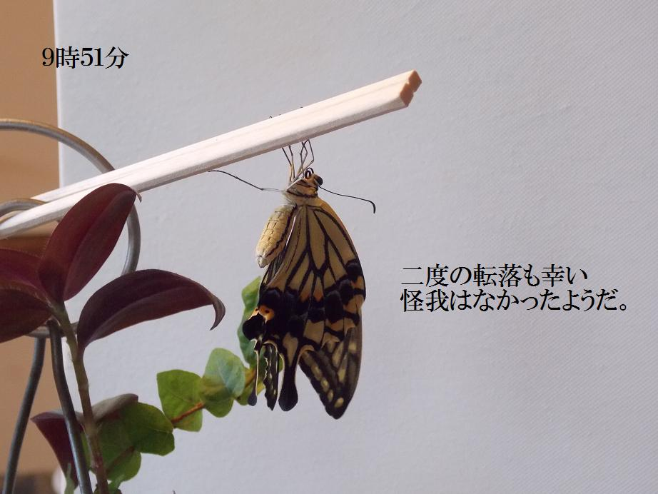 b0193252_2034536.jpg