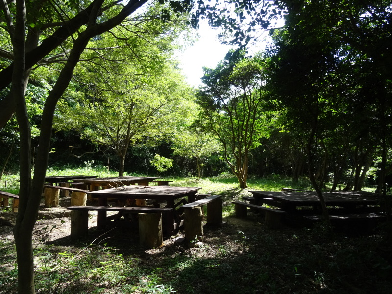 うみべの森は ただ今は順調です     by     (TATE-misaki)_c0108460_21021302.jpg