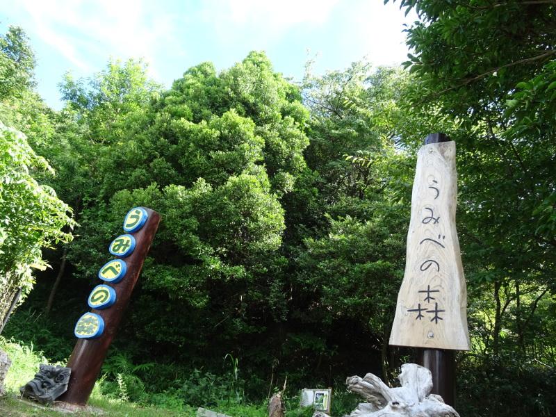 うみべの森は ただ今は順調です     by     (TATE-misaki)_c0108460_21021557.jpg