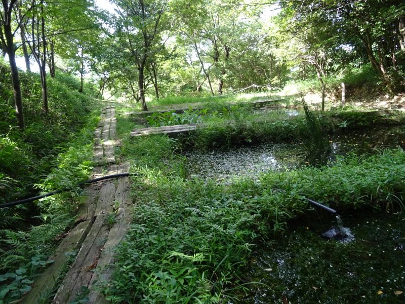 うみべの森は ただ今は順調です     by     (TATE-misaki)_c0108460_21021713.jpg