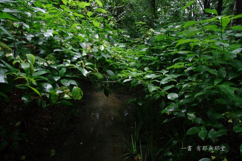京都・五山の送り火_a0157263_00501474.jpg