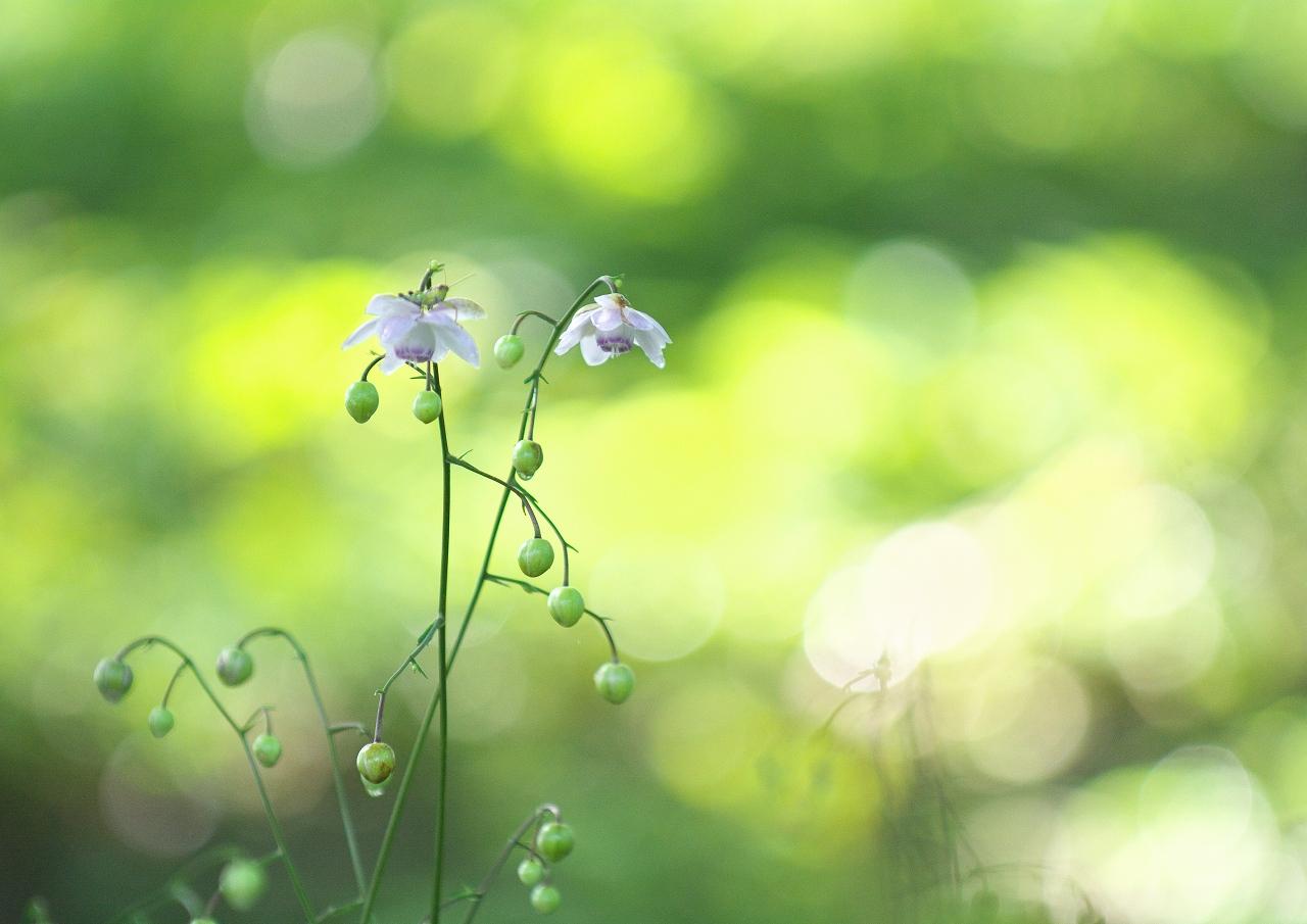 森の妖精 2_f0018464_10361411.jpg