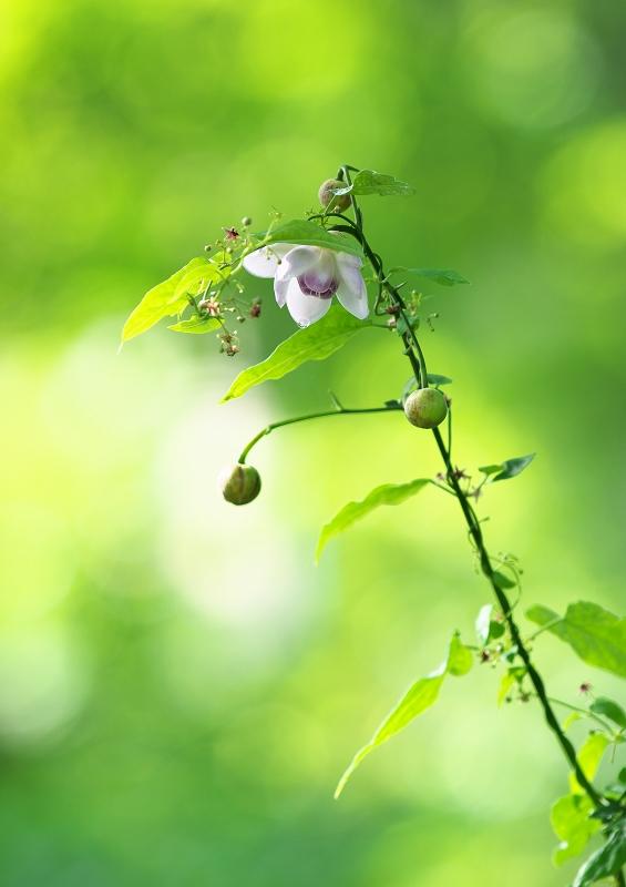 森の妖精 1_f0018464_1039789.jpg