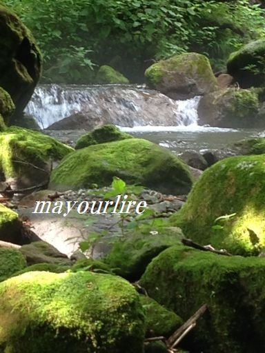 神秘的な渓流_d0169179_02282.jpg