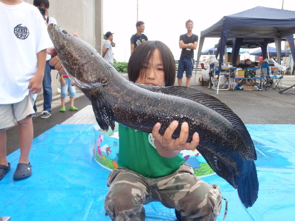 Ratty Twister SNAKEHEAD COMPE 2014_a0153216_23322427.jpg