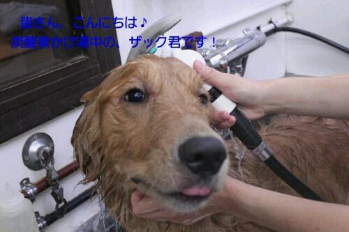b0130018_20114238.jpg