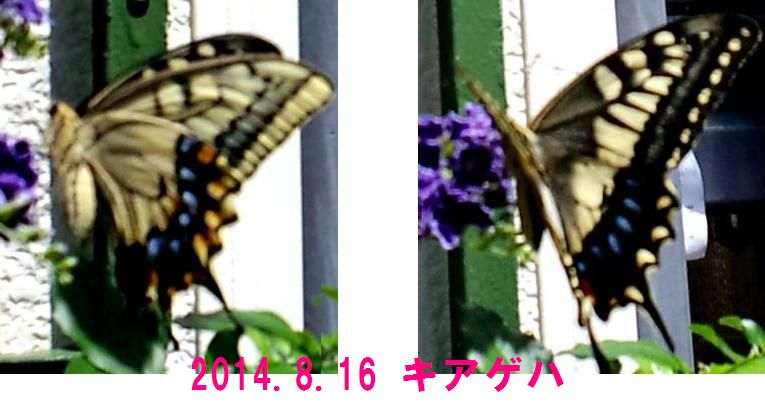 a0221455_027012.jpg