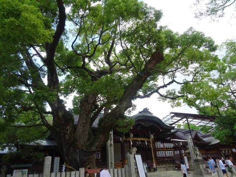 炎天下をドライブ to 石切神社_c0108460_18075215.jpg