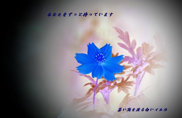 f0304384_2351624.jpg