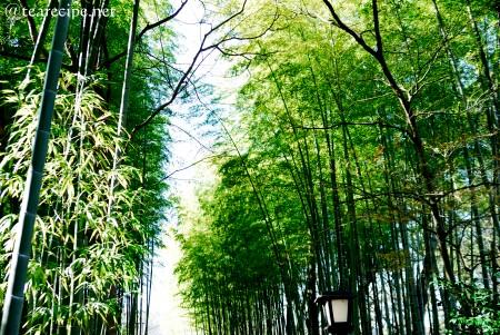 初詣 at 修禅寺_d0227799_1015148.jpg