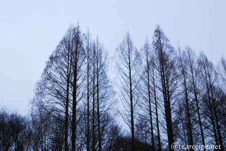 冬の夕暮れ_d0227799_10164249.jpg