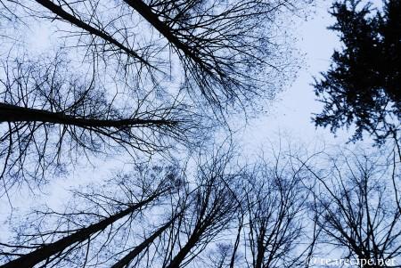 冬の夕暮れ_d0227799_10164411.jpg