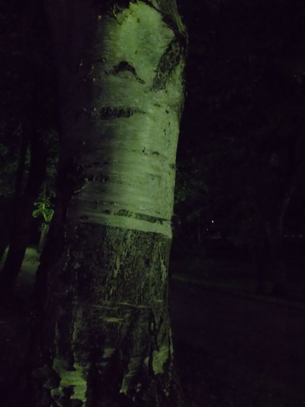 夜の帰り道:北大構内_c0025115_2252659.jpg
