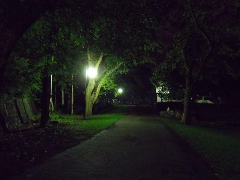 夜の帰り道:北大構内_c0025115_225325.jpg