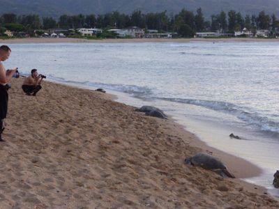 14年7月ハワイ 17★カメとの遭遇、再び_d0285416_824416.jpg