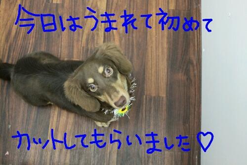 b0130018_2142497.jpg