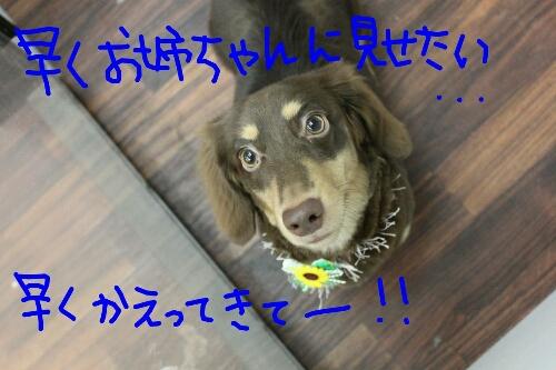 b0130018_21433193.jpg