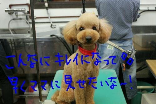 b0130018_22174336.jpg