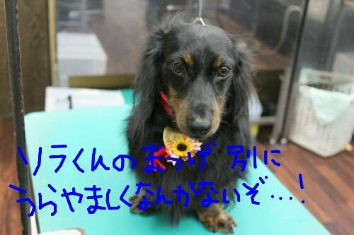 b0130018_224556.jpg