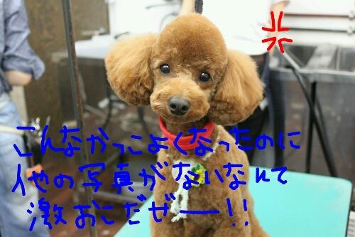 b0130018_229497.jpg