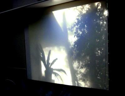 猛暑も和らぐ?植物を楽しむスクリーンの景色_e0010418_17462376.jpg