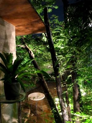 猛暑も和らぐ?植物を楽しむスクリーンの景色_e0010418_17482122.jpg