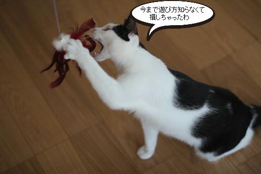 おもちゃ遊び習得とシニア猫さんの近況報告_e0151545_19395296.jpg